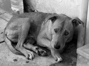 URGENT: appel à l'aide pour les chiens de Roumanie !