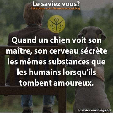 S'attacher à son chien