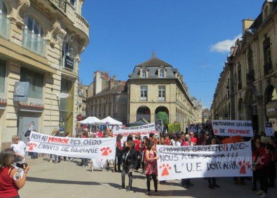 Manifestations pour les chiens de Roumanie: le bilan