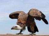Ces animaux qui nous font peur...