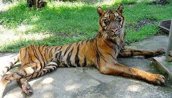 Nouveau scandale au zoo de Surabaya