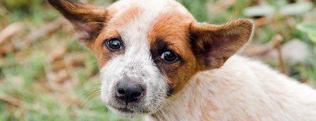 Pétition IFAW: Non à l'abattage des chiens errants à Bali !