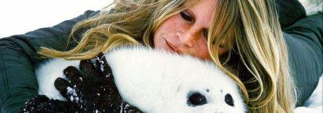 La chasse aux phoques/otaries