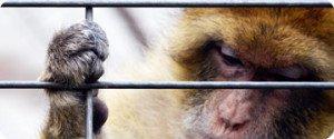 Stop vivisection, acte 2 !