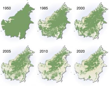 L'huile de palme: un fléau mondial