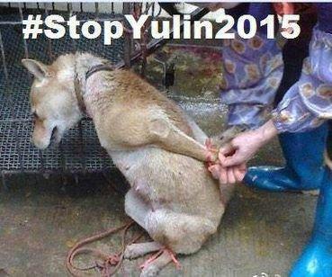 Yulin, l'enfer sur terre.
