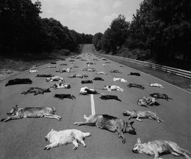 L'abandon tue des milliers d'animaux chaque année. Soyez responsables.