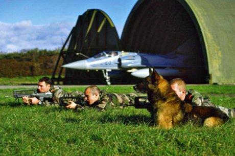 Chiens et militaires