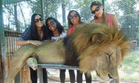 Zoos: article actu