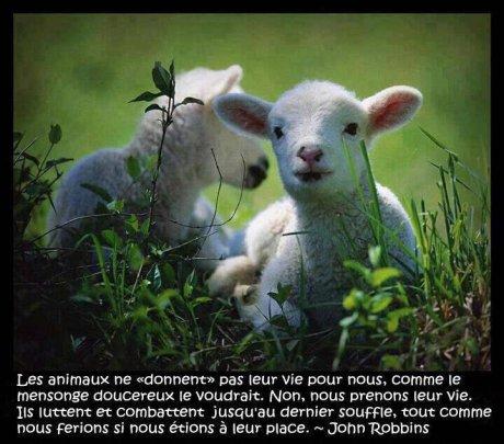 """Parce que """"exploités"""" n'est pas un mot trop fort pour décrire la condition des animaux"""