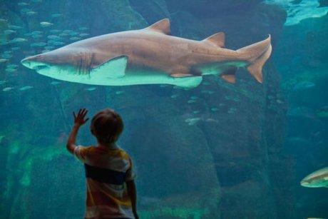 Aquariums, zoos & cie: quand captivité rime avec calamité