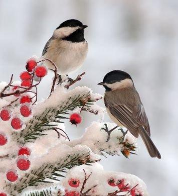 Protéger les animaux du froid
