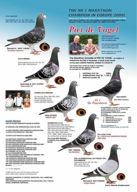 PIETE de VOGEL  pigeon Aarden