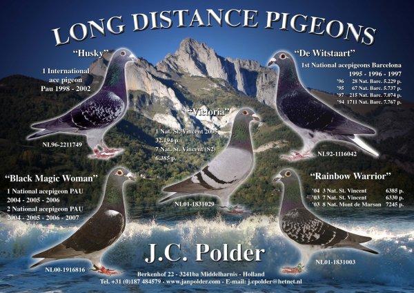 JEAN polder  PIGEON Aarden