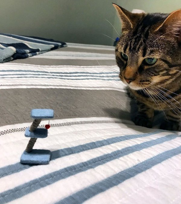 Comment décevoir ton chat??