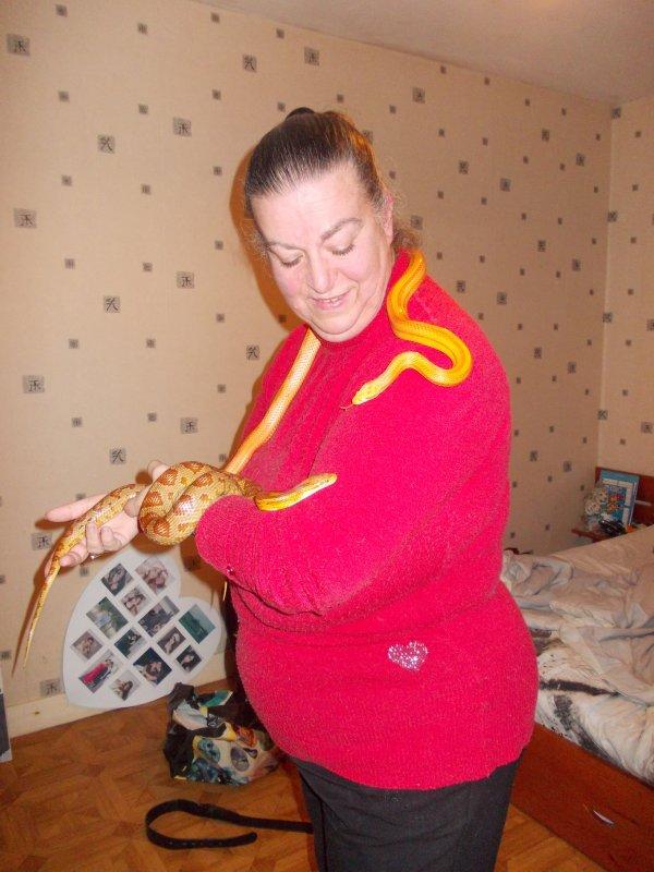 les serpents des animaux magnifiques