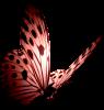 papillonliberte215