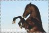 EquestrianSun