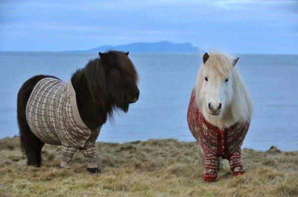 ****** Les poneys aussi *******