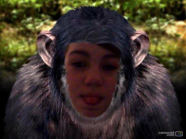 le beau gorille
