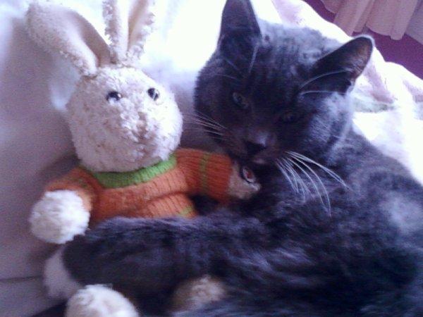 voila charlie avec son doudou le lapinou