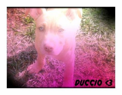 *_* Duccio
