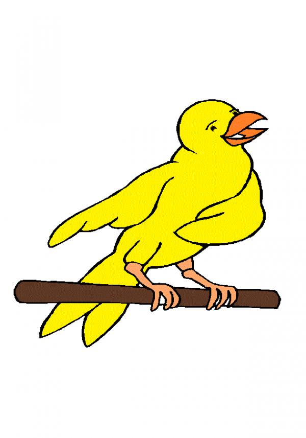 Bienvenu sur mon blog au ornithologues
