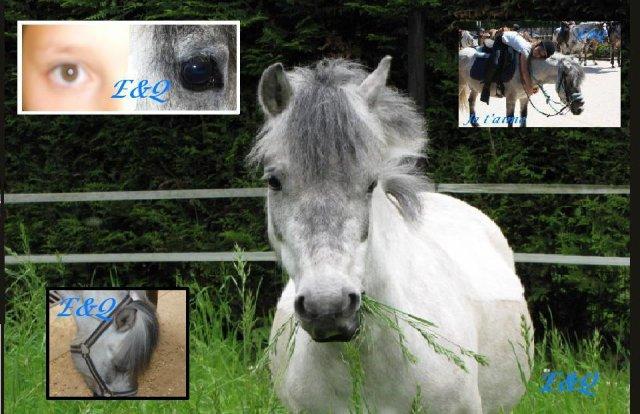 Blog de Mimi et ses pti's poneys