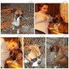 mes-animaux-et-moi-41