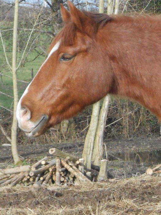 Blog de love-horse2001