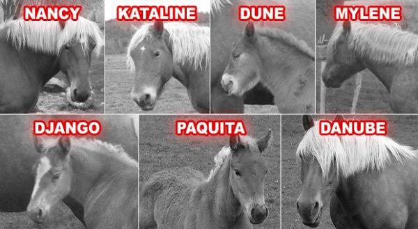 Urgence abattoir, quelques jours pour sauver 7 chevaux !