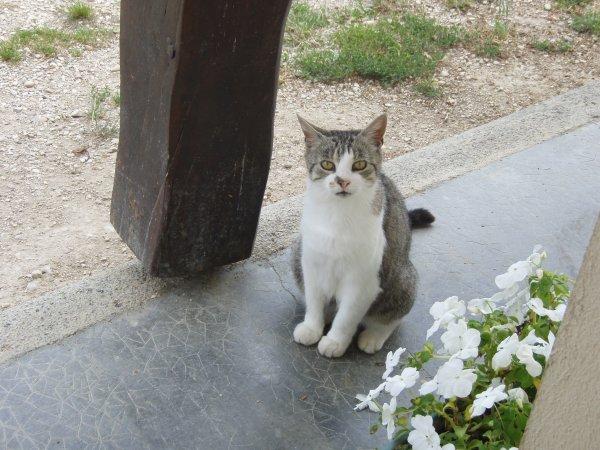 Mon petit chat ^^