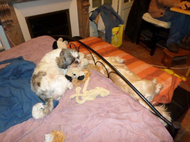 pauvres bêtes !!!! ....