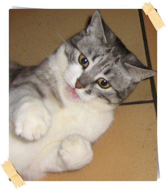 . Mlle Tigrette est née le 8 mars 2002 à Bavans (25) .