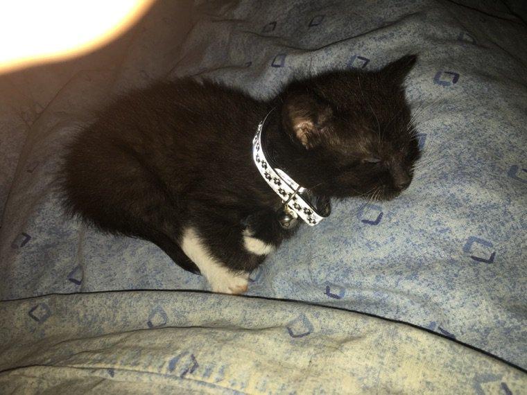 """Notre nouveau bebe chat """"bétamèche"""""""