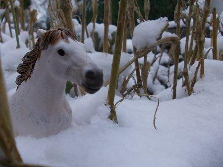 Sortie dans la neige
