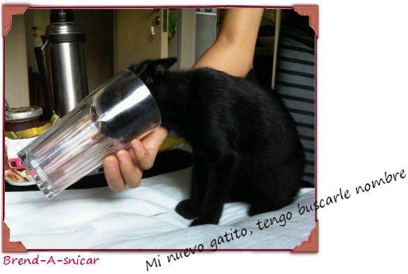 Bren et Carlos  -  Photos après S.C  -  Bren' à un nouveau chat