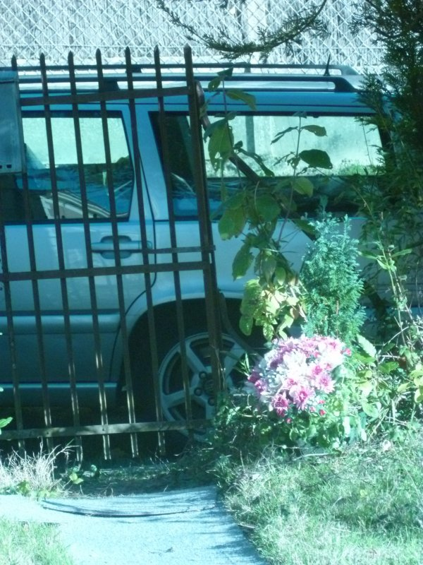 Cherche Ange Gardien de Jardin...& Jardinier