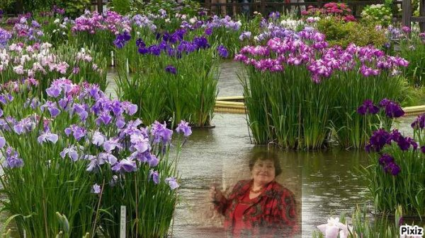 Iris, Pivoines Pensées & Lavandes