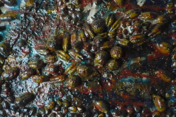 Noyaux des dattes dans une pièce  de déco !