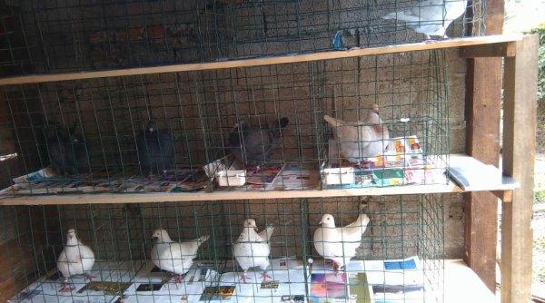 nouvelles cages pour préparer les expo