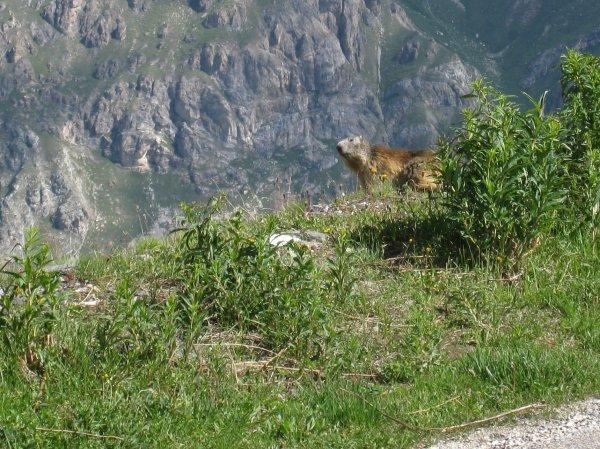 Vendredi 14 juillet - 2 cols de plus de 2000 m - Tout d'abord, le Col de l'Iseran !