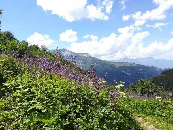 Jeudi 23 juillet - Randonnée pédestre - 10 km de marche !