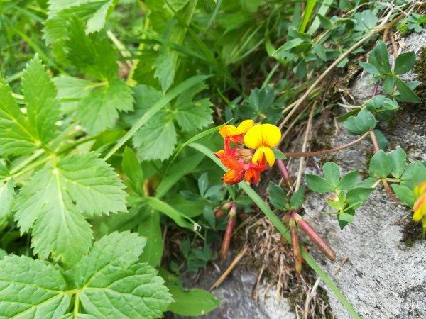 Mercredi 12 août - Randonnée pédestre aux Contamines-Montjoie