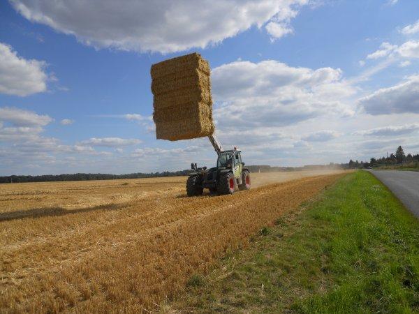 pressage de paille avec un tracteur AXION 850 un téléscopique scorpion et une presse massey