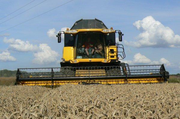 new holland  dans du blé
