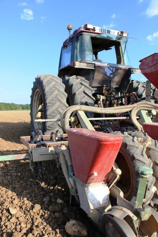 semis de maïs ensilage