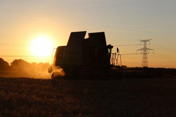 moisson au coucher de soleil qui offre de belle photo