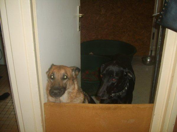 roxi et delka dans leur chambre