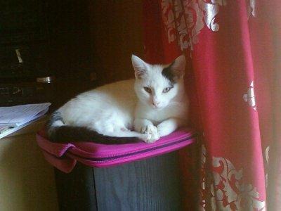 :) Mon Liloo <3